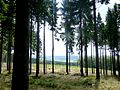 Soonwald - Nähe Hochsteinchen - panoramio (1).jpg