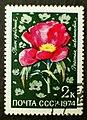 Soviet stamps 1974 2k Paeonia intermedia.JPG