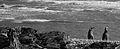 Spheniscus magellanicus - Flickr - Felipe Del Valle Batalla.jpg