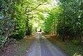 Springfield Lane, Colgate Hill - geograph.org.uk - 1289383.jpg