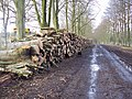 Stacked timber alongside First Broad Drive, Grovely Wood - geograph.org.uk - 350614.jpg
