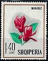 Stamp of Albania - 1968 - Colnect 331498 - Saucer Magniola Magnolia soulangeana.jpeg
