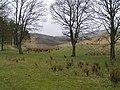 Stanley Moor Reservoir - geograph.org.uk - 161354.jpg