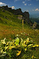 Stara planina08.jpg