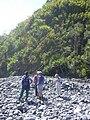 Starr 030729-0043 Phyllostachys nigra.jpg