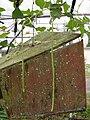 Starr 080607-7262 Vigna unguiculata subsp. sesquipedalis.jpg