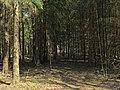 Steenwijk - Flickr - Eric de Redelijkheid (1).jpg