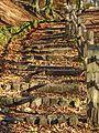 Steps in Judy Woods (11091317334).jpg