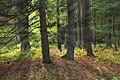 Streamside Woods (1) (9938978914).jpg