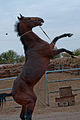 Studfarm in Turkmenistan - Flickr - Kerri-Jo (17).jpg