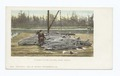 Sturgeon on the Colmbia River, Oregon (NYPL b12647398-62160).tiff