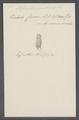 Stylonychia pustulata - - Print - Iconographia Zoologica - Special Collections University of Amsterdam - UBAINV0274 113 18 0016.tif