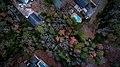 Suburban houses near a forest (Unsplash).jpg