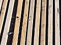 Suelo de madera, acceso a playa.jpg