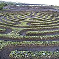 Surprise maze at the top of the lava flow (15341871990).jpg