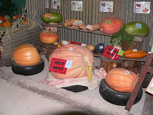 English: The Giant Pumpkin competition at the ...