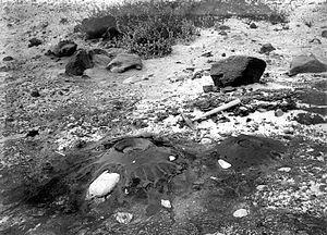 "Petroleum seep - Tar ""volcano"" in the Carpinteria, California asphalt mine.  Oil exudes from joint cracks in the petroliferous shale forming the floor of mine. 1906 photo, U.S. Geological Survey Bulletin 321"