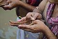 Tarpan - Jagannath Ghat - Kolkata 2012-10-15 0615.JPG