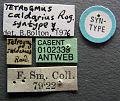 Tetramorium caldarium casent0102333 label 1.jpg