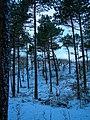 Texel - De Dennen - View NW in Winter.jpg