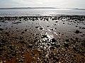 The River Humber Shoreline - geograph.org.uk - 1199910.jpg