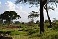 The Serengeti from the Voyager Ziwani Safari Camp, on the edge of the Tsavo West National Park, near Ziwani, Kenya 3.jpg