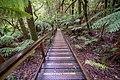 The Treetop Walk (19199559768).jpg