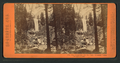 The Vernal Fall, 350 feet high, Yo-Semite Valley, Mariposa County, by Lawrence & Houseworth 4.png
