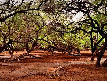 The alone deer.jpg