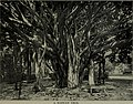 The paradise of the Pacific- the Hawaiian Islands (electronic resource) (1900) (14760244461).jpg