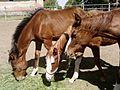 Three horses.jpg