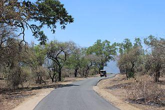 Mudumalai National Park - Mudumalai Tiger Reserve, Tamil Nadu