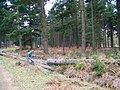 Timber clearance, Sloden Inclosure - geograph.org.uk - 1169836.jpg