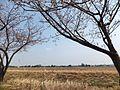 Toideichinose, Takaoka, Toyama Prefecture 939-1101, Japan - panoramio (8).jpg