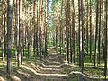 Tomsky District, Tomsk Oblast, Russia - panoramio (96).jpg