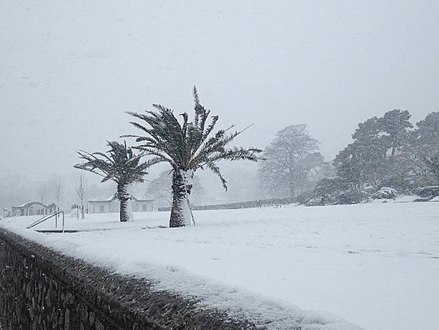 Torquay sea front during Storm Emma - March 2018 Torquay Palm Trees.jpg