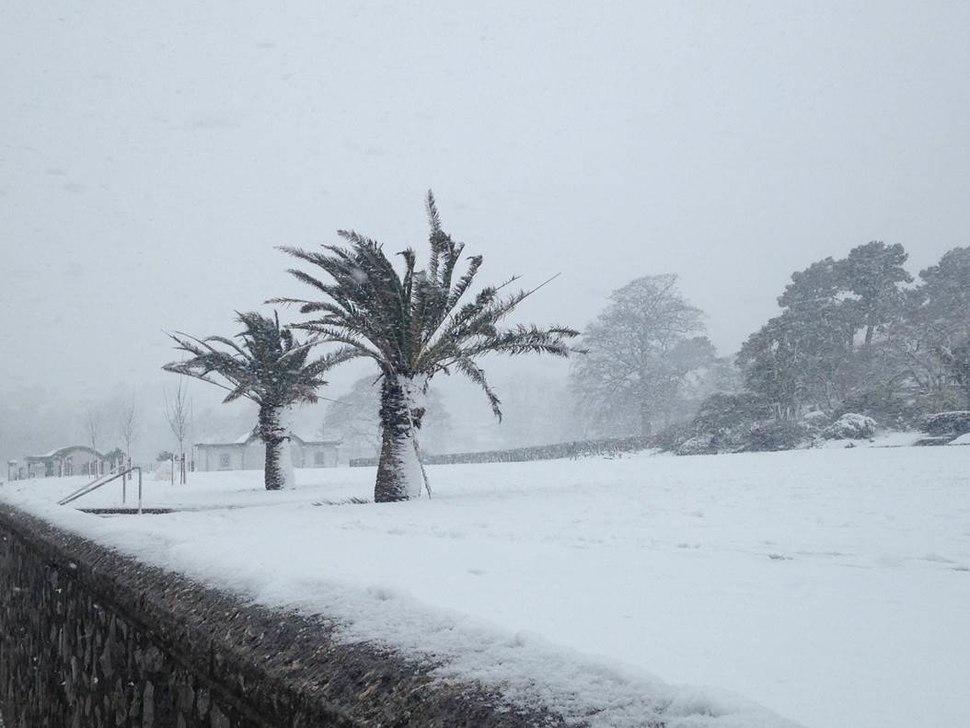 Torquay Palm Trees