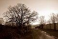 Toulouse - 4 Chemin Carrosse - 20120110 (1).jpg