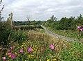 Towards Woodbridge near Little Rodmore Farm - geograph.org.uk - 549192.jpg