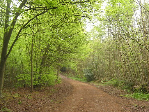 Track in Farningham Wood - geograph.org.uk - 1852150