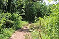 Trail in Lake Conestee Nature Park, June 2019.jpg