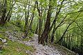 Trail in Slovenia 4.jpg