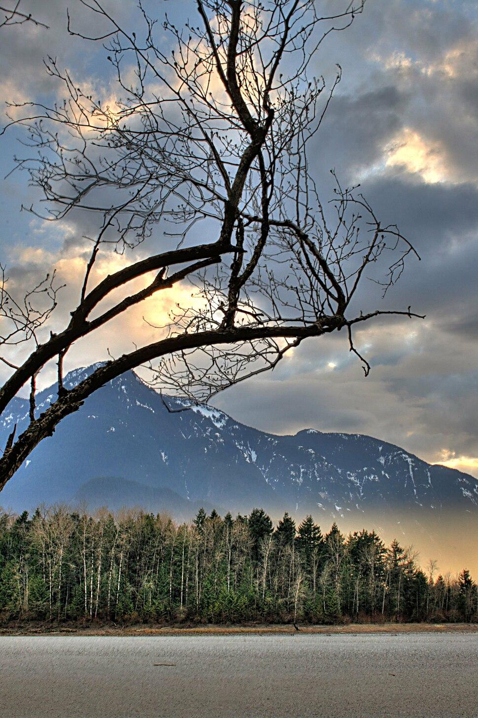 Tree Hope British Columbia Canada 03A