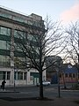 Tree in Liverpool January 28 002.jpg
