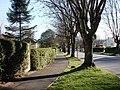 Trees, Brunel Road, Churston, Torbay - geograph.org.uk - 1225638.jpg