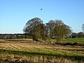 Trees Between Fields - geograph.org.uk - 284140.jpg