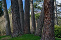 Trees in Hagley Park 01.jpg