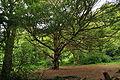 Trees in Tehidy Park (0418).jpg