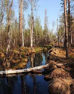 Rdeysky Nature Reserve - Tupichenka River, Rdeysky Nature Reserve