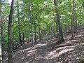 Turkey Ridge Trail.JPG